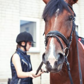 Girl grooming horse on BSC summer camp