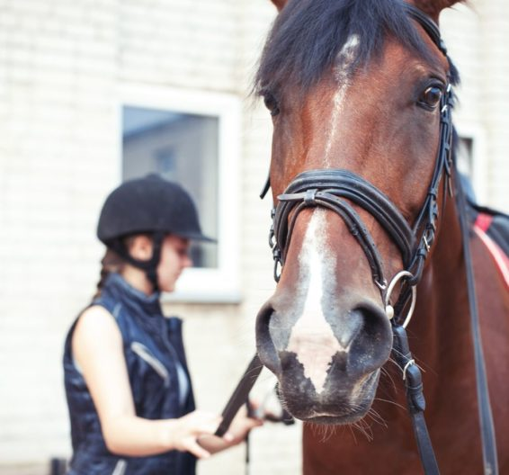 Jeune fille brossant un cheval à un camp d'été BSC