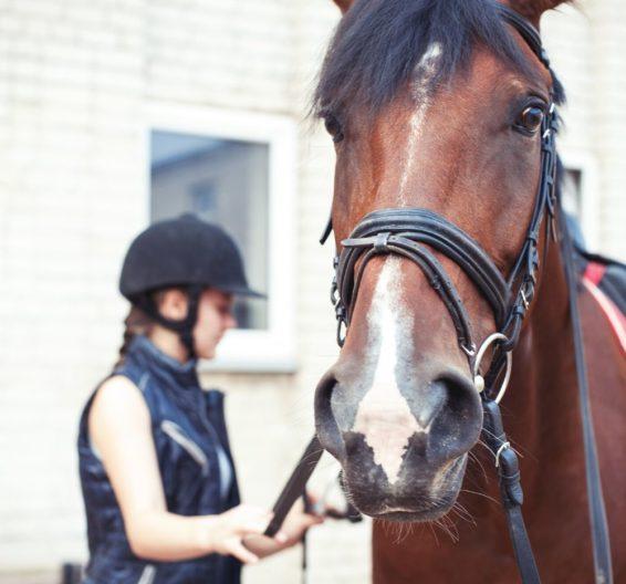 Menina preparando o cavalo no acampamento de verão BSC