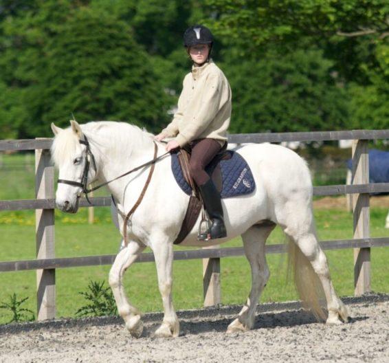 imagem de uma menina montando um cavalo branco